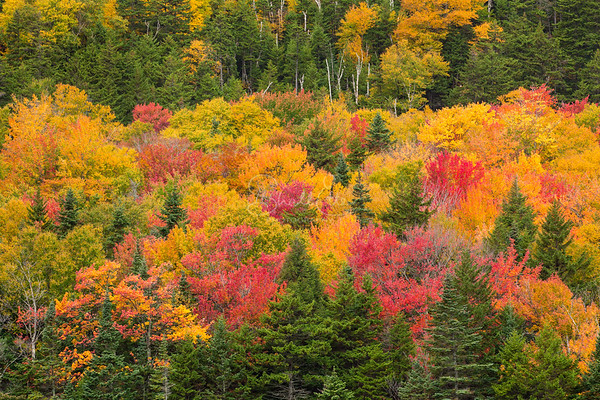 Trees Bursting With Color