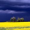 Hail clouds move in over a canola field, Saskatchewan Canada