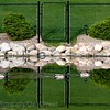 Reflections in the lake, Windsor Park, Regina