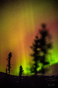 Gabe_Alaska_Aurora_Borealis_March2013-_DSC3441