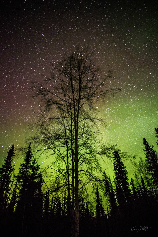 Alaska; Aurora; Favorite things; Landscape; pretty; Sky; Winter; Northern Lights; March; Aurora Borealis