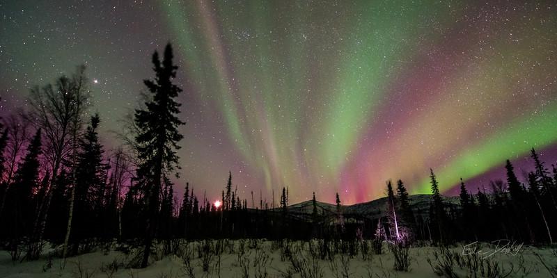 Gabe_Alaska_Aurora_Borealis_March2013-_DSC3815