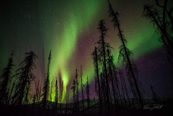 Gabe_Alaska_Aurora_Borealis_March2013-_DSC3866