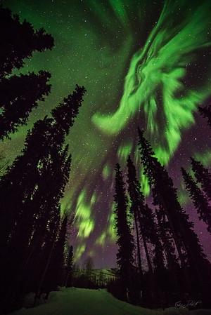 Gabe_Alaska_Aurora_Borealis_March2013-_DSC2715