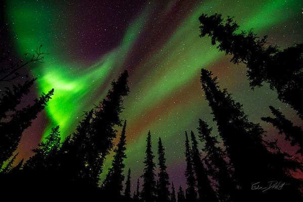 Aurora Borealis_Chena River Valley_Alaska_photos by Gabe DeWitt_March 21, 2014-226
