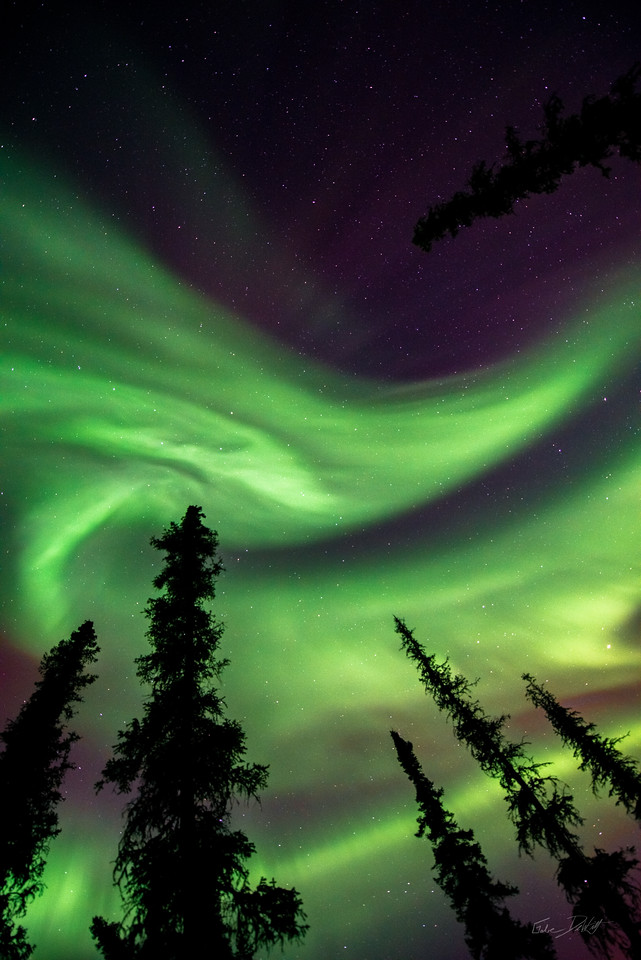 2014; Alaska; Alaska 2014; Aurora; Chena River Valley; Colorado Creek Cabin; Favorite things; Nikon D800; Places; Seasons; Trees; Winter; march; photo by Gabe DeWitt; pretty; Northern Lights; Aurora Borealis; Solar Storm