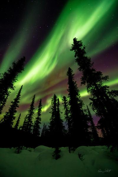 Aurora Borealis_Chena River Valley_Alaska_photos by Gabe DeWitt_March 21, 2014-481