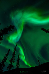 Aurora Borealis_Chena River Valley_Alaska_photos by Gabe DeWitt_March 21, 2014-511