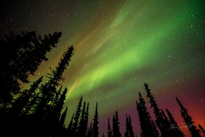 Aurora Borealis_Chena River Valley_Alaska_photos by Gabe DeWitt_March 21, 2014-206
