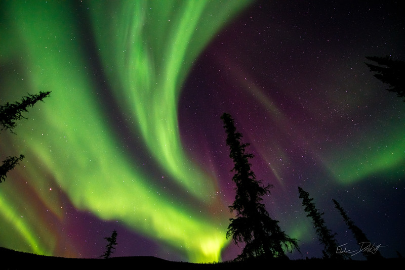 Aurora Borealis_Chena River Valley_Alaska_photos by Gabe DeWitt_March 21, 2014-493