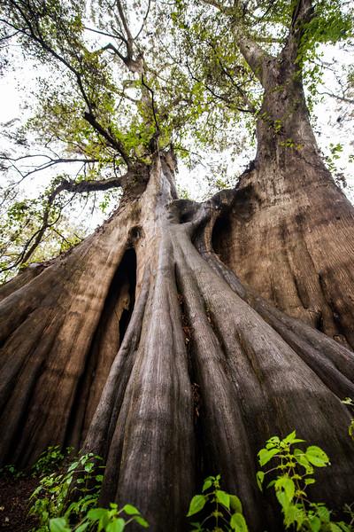 Cypress Trees_Cat Island_Louisiana_photo by Gabe DeWitt_November 05, 2014-89