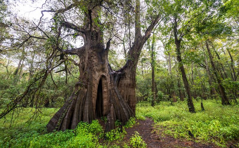 Cypress Trees_Cat Island_Louisiana_photo by Gabe DeWitt_November 05, 2014-71