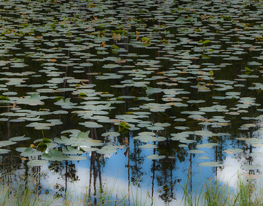 Wyoming - Lily Pad Lake, Yellowstone National Park