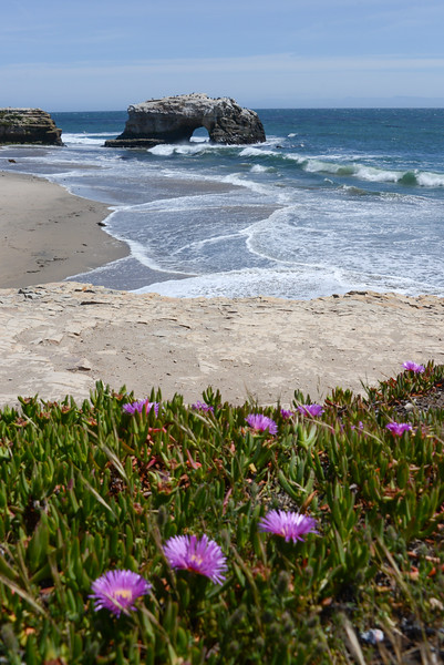 California - Natural Bridges State Beach, Santa Cruz