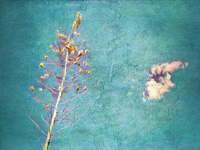 Yucca & Cloud, Sedona, AZ