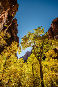 Autumn in Zion I