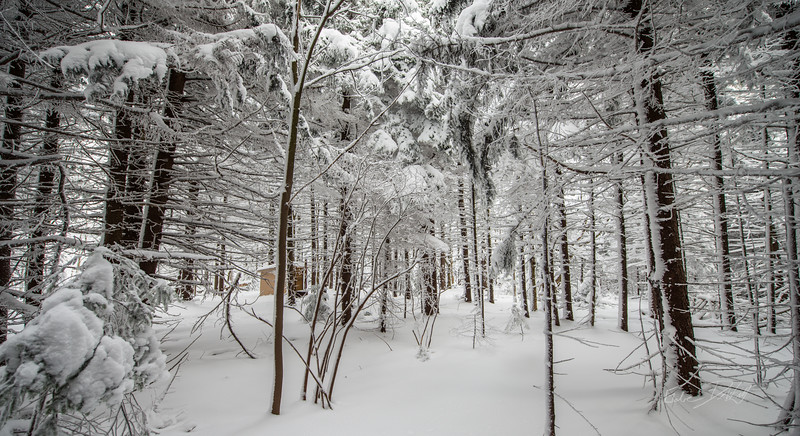 Cross Country Skiing_White Grass_Canaan Valley_West Virginia_photos by Gabe DeWitt_November 28, 2014-12