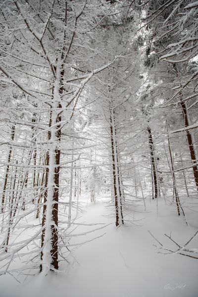 Cross Country Skiing_White Grass_Canaan Valley_West Virginia_photos by Gabe DeWitt_November 28, 2014-14