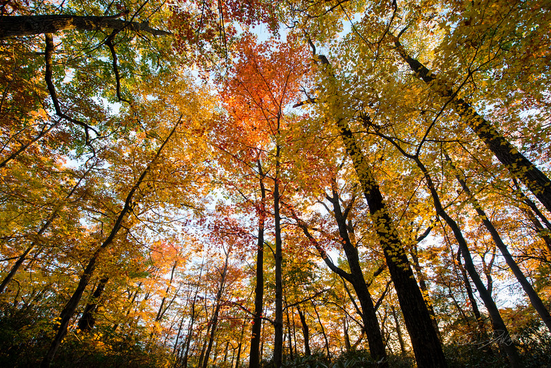 Autumn_Coopers Rocks_West Virginia_photo by Gabe DeWitt_October 15, 2014-17