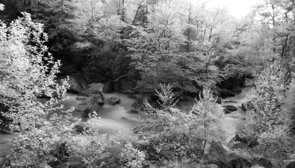 Deckers Creek_spring_WV_photos by Gabe DeWitt_May 13, 2008-19