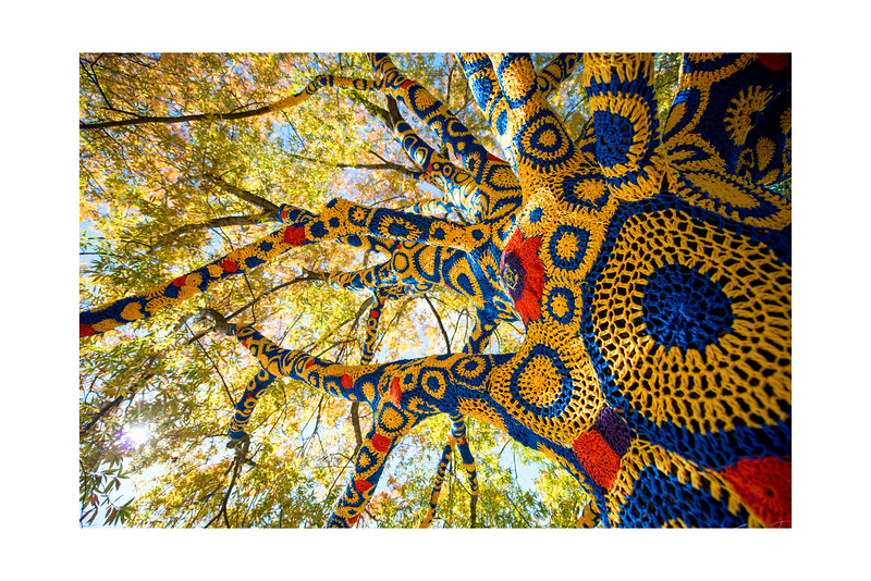 Blue and Gold Tree_GRD3181