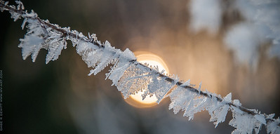 Frosted Sunrise