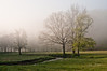 Spring Fog_GRD7035