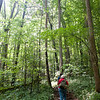 Joyce Kilmer Memorial Forest in Western North Carolina