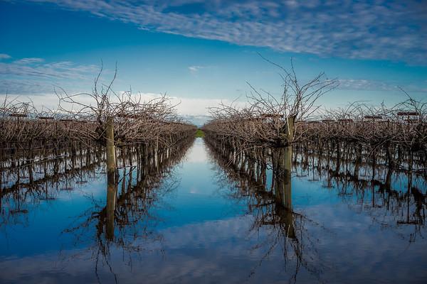 Vine Reflection