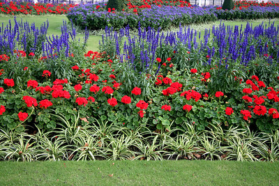 Flowers, Buckingham Palace Garden