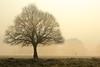 Richmond Park Fog Dog