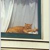 Cat in Window-6 1