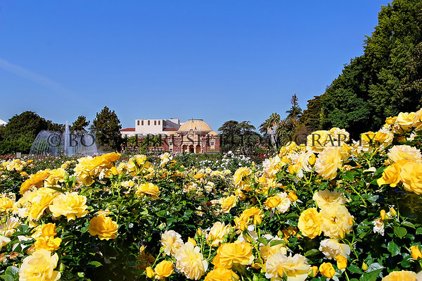 Los Angeles Natural History Museum from Exposition Park Rose Garden.