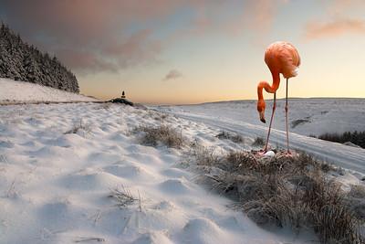 Lost flamingo