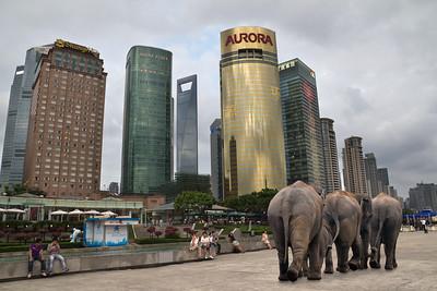 Lost elephants