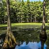 Swamp, Tallahassee, FL