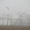 Morning fog at Crosbys Seafood