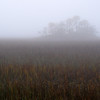 Folly marsh island in fog off Folly Rd II