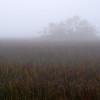 Folly marsh island in fog off Folly Rd II