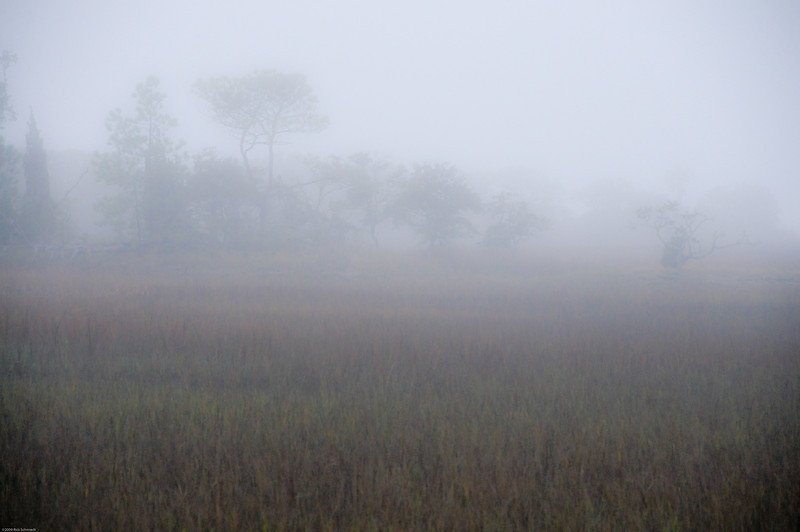 Tenth St. Folly marsh fog
