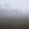Tenth St. Folly marsh fog