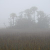 Folly marsh island in fog off Folly Rd I
