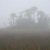 Folly marsh island in fog off Folly Rd I