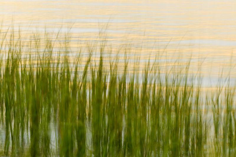 Hobcaw Marsh Grass Golden Reflections