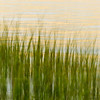Hobcaw Marsh Grass Golden Reflections