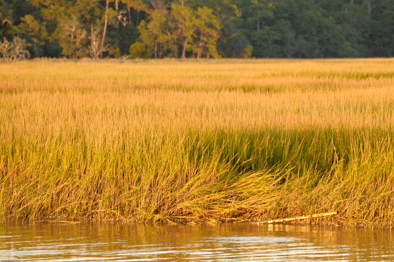 Hobcaw marsh at sunset II