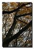 """""""Fall Foliage"""""""