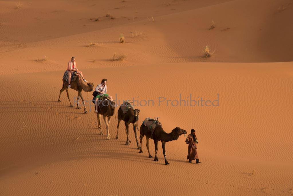 Have Camel Will Travel Sahara Morocco April 2013