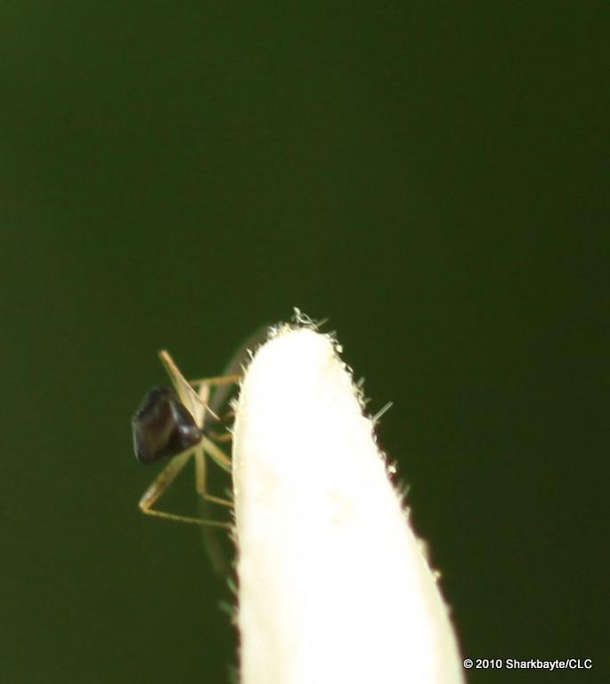 Bug heaven