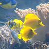 National Aquarium of Baltimore